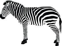 зебра силуэта иллюстрация штока