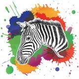 Зебра с красочным брызгает иллюстрацию вектора Стоковые Фотографии RF