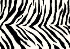 зебра текстуры кожи Стоковое Изображение