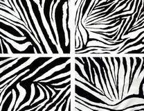 зебра текстуры ткани Стоковые Фотографии RF