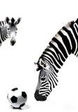 зебра футбола шарика Африки южная Стоковое фото RF