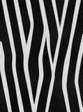 зебра шерсти стоковая фотография