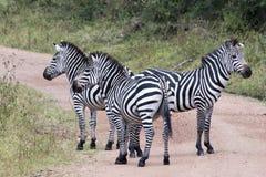 Зебры в Африке Стоковые Изображения