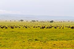 Зебры и голубые антилопы гну в ландшафте Serengeti Стоковая Фотография RF