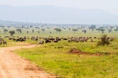 Зебры и голубые антилопы гну в ландшафте Serengeti Стоковое Фото