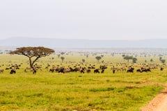 Зебры и голубые антилопы гну в ландшафте Serengeti Стоковое Изображение