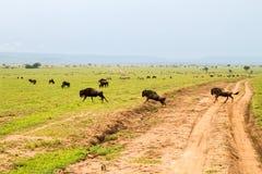 Зебры и голубые антилопы гну в ландшафте Serengeti Стоковые Фотографии RF