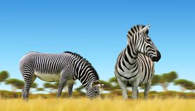 Зебры на африканской саванне Стоковые Изображения