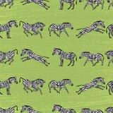 зебры предпосылки Стоковые Фотографии RF