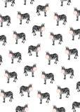 Зебры с жевательными резинками Стоковая Фотография