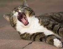 зевать Стоковая Фотография RF