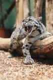 Зевая кот рыбной ловли Стоковые Фото