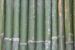 Зеленая бамбуковая предпосылка загородки Стоковые Изображения RF