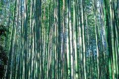 Зеленая бамбуковая роща, бамбуковая текстура концепции предпосылки Японии леса стоковые фотографии rf