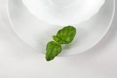 зеленая белизна Стоковые Фото