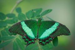 Зеленая богина Стоковые Фотографии RF