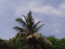 Зеленая большая пальма с ясной предпосылкой голубого неба стоковая фотография