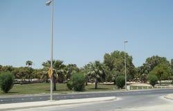 Зеленая вегетация растя в пустыне Саудовца стоковая фотография rf