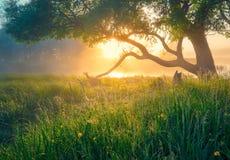 зеленая весна ландшафта желтый цвет весны лужка одуванчиков предпосылки полный вал весны природы ветви яркий цветя зеленый стоковые фотографии rf