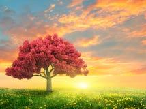 зеленая весна ландшафта стоковая фотография
