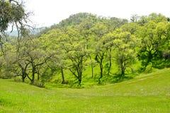 зеленая весна ландшафта стоковое изображение