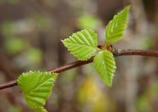 зеленая весна листьев стоковые фото
