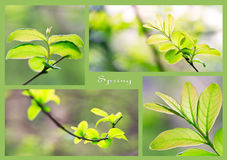 зеленая весна Стоковые Фотографии RF