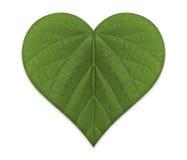 зеленая влюбленность Стоковые Изображения