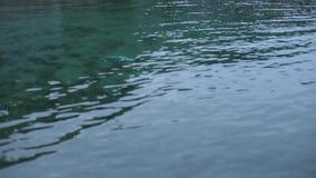Зеленая вода около банка акции видеоматериалы