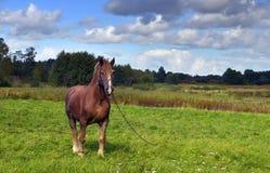 зеленая вода pasturage лужка лошади Стоковые Фотографии RF