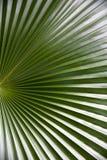 зеленая волна Стоковые Изображения