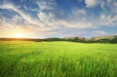 зеленая гора лужка Стоковые Изображения RF