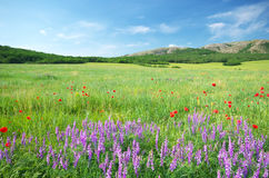 зеленая гора лужка Стоковая Фотография