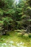 Зеленая дверь в фантастичном плотном лесе Стоковое фото RF