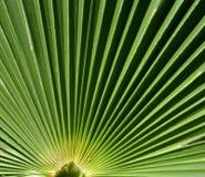Зеленая деталь лист пальмы, линии, абстрактные Стоковое Фото