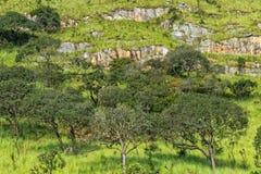 Зеленая долина в malanje, Анголе вышесказанного стоковая фотография