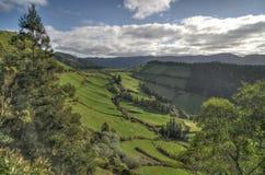 Зеленая долина на Азорских островах стоковая фотография