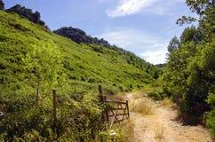 Зеленая долина стоковое фото rf