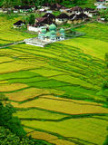 зеленая долина Стоковое Изображение