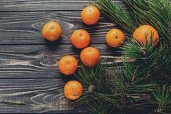 Зеленая ель разветвляет с конусами tangerine и анисовки и сосны на ru Стоковые Изображения RF