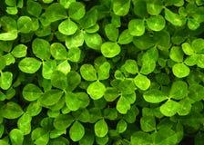 Зеленая естественная предпосылка листьев стоковое фото