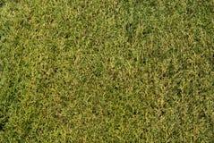 зеленая естественная текстура Стоковое Изображение
