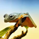Зеленая жаба на дереве стоковое фото rf