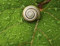 зеленая жизнь Стоковая Фотография RF