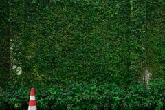 Зеленая загородка стоковое изображение