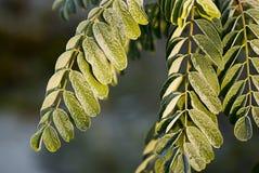 зеленая зима листьев Стоковые Фотографии RF