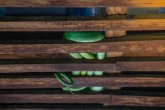 зеленая змейка стоковое фото