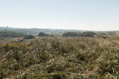 Зеленая зона в окружающей среде дюн Орегона, США стоковая фотография