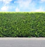 Зеленая изгородь от вечнозеленых заводов с дорогой неба и гравия Море стоковое изображение