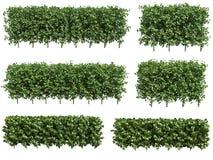 зеленая изгородь Стоковое Изображение